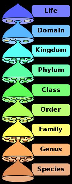 Taxonomical Rank Order