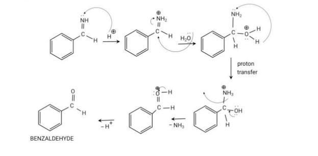 Hydrolysis of Benzaldimine