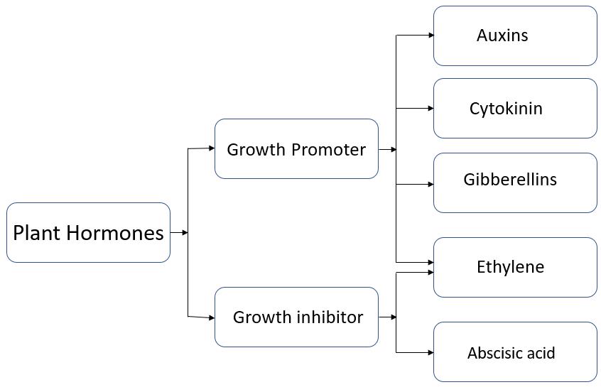 Plant Hormones Types