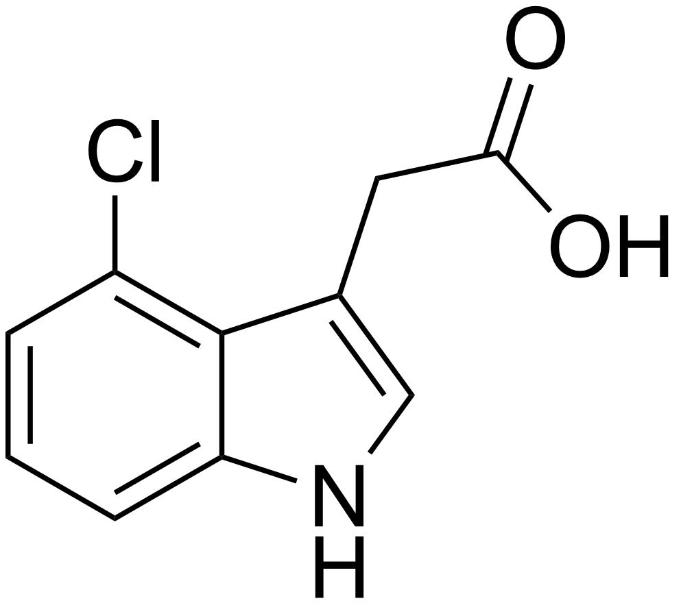 The Auxin - a plant hormones